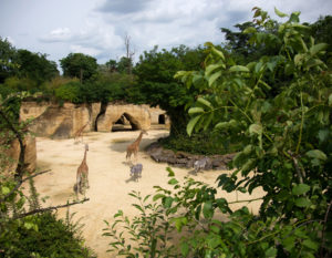 camping-proche-zoo-doue-la-fontaine